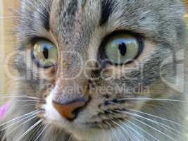 Cat photographed close up in the daytime
