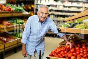 Senior man choosing tomato carefully