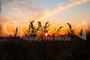 Dry spare of grass in sunset dawn. Soft focus