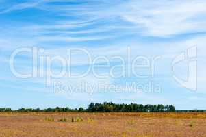 Large empty field ending at tree line under cirrus clouds