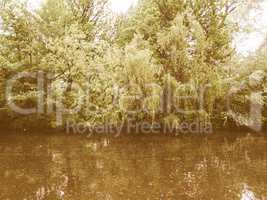 Retro looking Weeping Willow