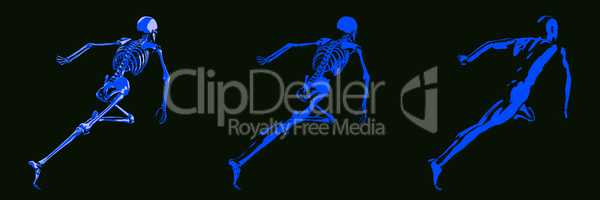 Human Body and Skeleton Anatomy