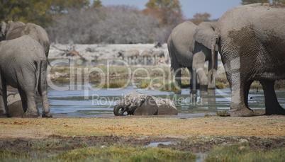 Elefantenherde in Namibia Afrika