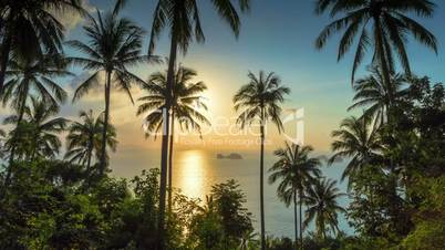 Tropical sunset with palms time lapse