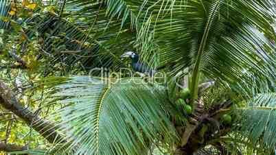Tropical bird on palm tree