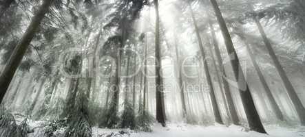 Winterwald in magischer Lichtstimmung