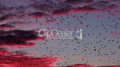 Flock Of Birds Flying At Purple Sunset