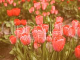 Retro looking Tulips picture