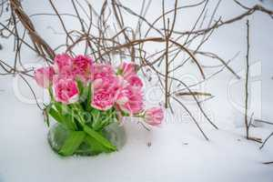 Fresh flowers in the snow