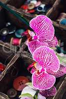 Sewing supplies and Orchid