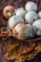 harvest onion