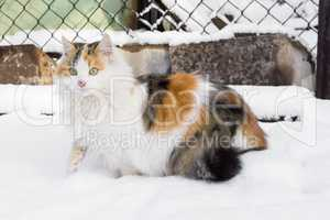 cat masked in the snow