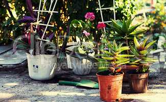 care of ornamental flowers in pots in the spring