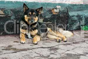 an abandoned dog