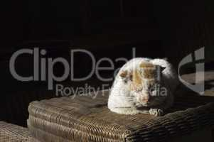 Old, shabby, homeless , stray cat resting in the sun 4
