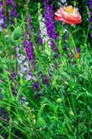 flower meadow