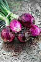 beam harvest colored onions