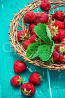 summer harvest of strawberries