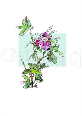 Plant flower rose