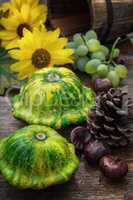 harvest squash