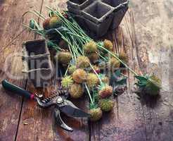 Cut autumn plants