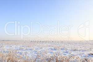 snow-covered field with grass