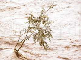 Retro looking Lonely tree resisting flood