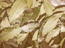 Retro looking Bay tree leaf
