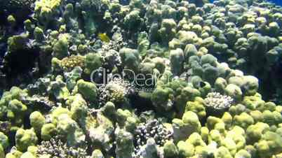 Sunny coral reef in the red sea