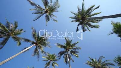 Palms on the island
