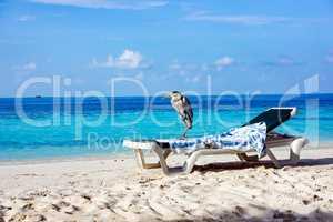 Grey Heron on a sun lounger