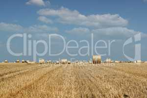agriculture field with straw bale