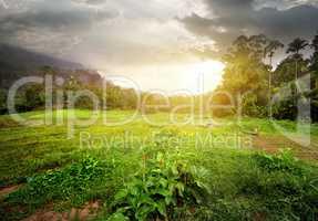 Field in jungles