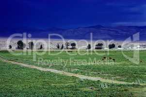 Meadow Valley, Nevada
