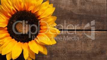 Sunflower on wood