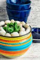 Succulent in pot