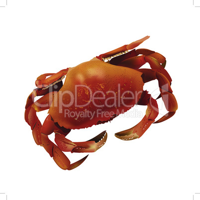 Sea crab mesh gradient vector illustration on a white background