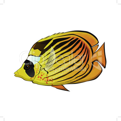 Butterfly fish vector illustration on a white background