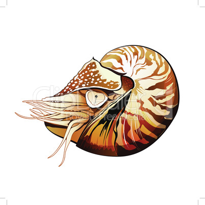 Sea shrimp vector illustration on a white background