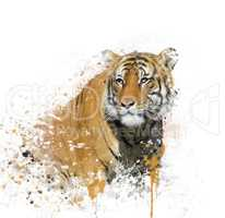 Tiger Portrait Watercolor