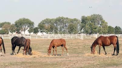 farm scene horses eating hay