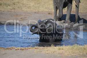 Elefanten Simbabwe (1)