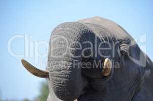 Elefanten Simbabwe (15)