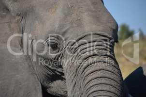Elefanten Simbabwe (16)