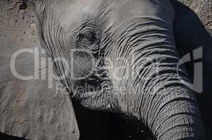 Elefanten Simbabwe (17)