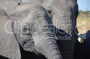 Elefanten Simbabwe (18)