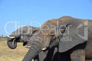 Elefanten Simbabwe (25)