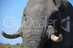 Elefanten Simbabwe (26)