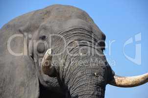 Elefanten Simbabwe (27)
