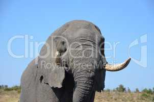 Elefanten Simbabwe (28)